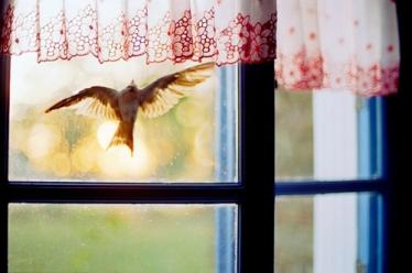 bird-hits-window